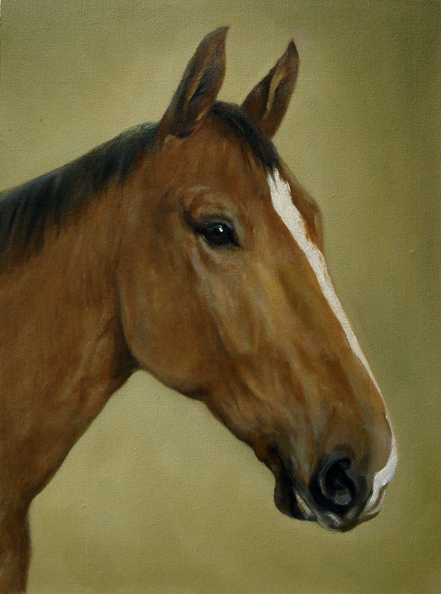 Hand painted horse porait. Oil on canvas.