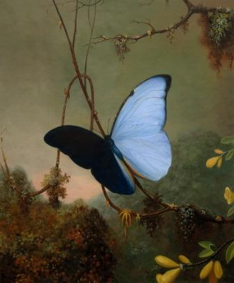 Heade - Blue Morpho Butterfly. Art reproduction by Fabulous Masterpieces