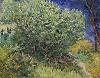 Van Gogh, Lilac Bush