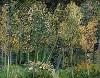 Van Gogh, The Grove